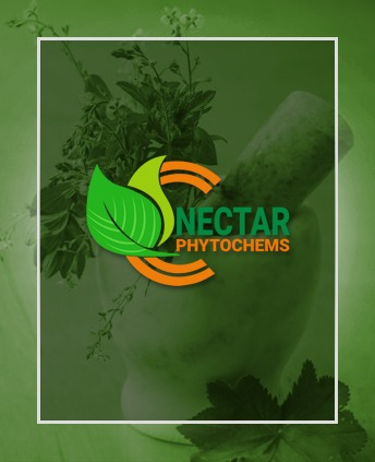 Nector Phyto Welcome Pic